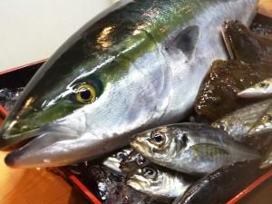 小田原産-お魚